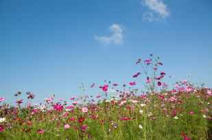 nature sky field flowers